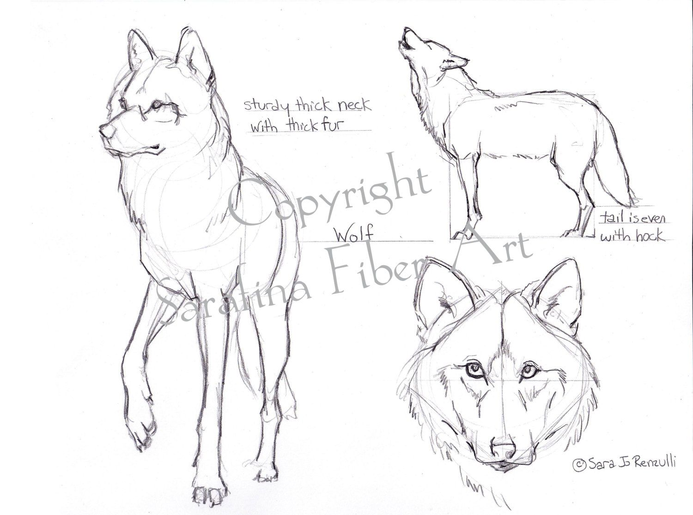 Fox/Wolf Reference Chart PDF van SarafinaFiberArt op Etsy | Animals ...