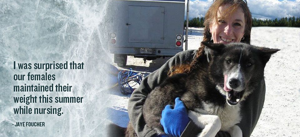 Jaye foucher on how inukshuk dog food works for her dog