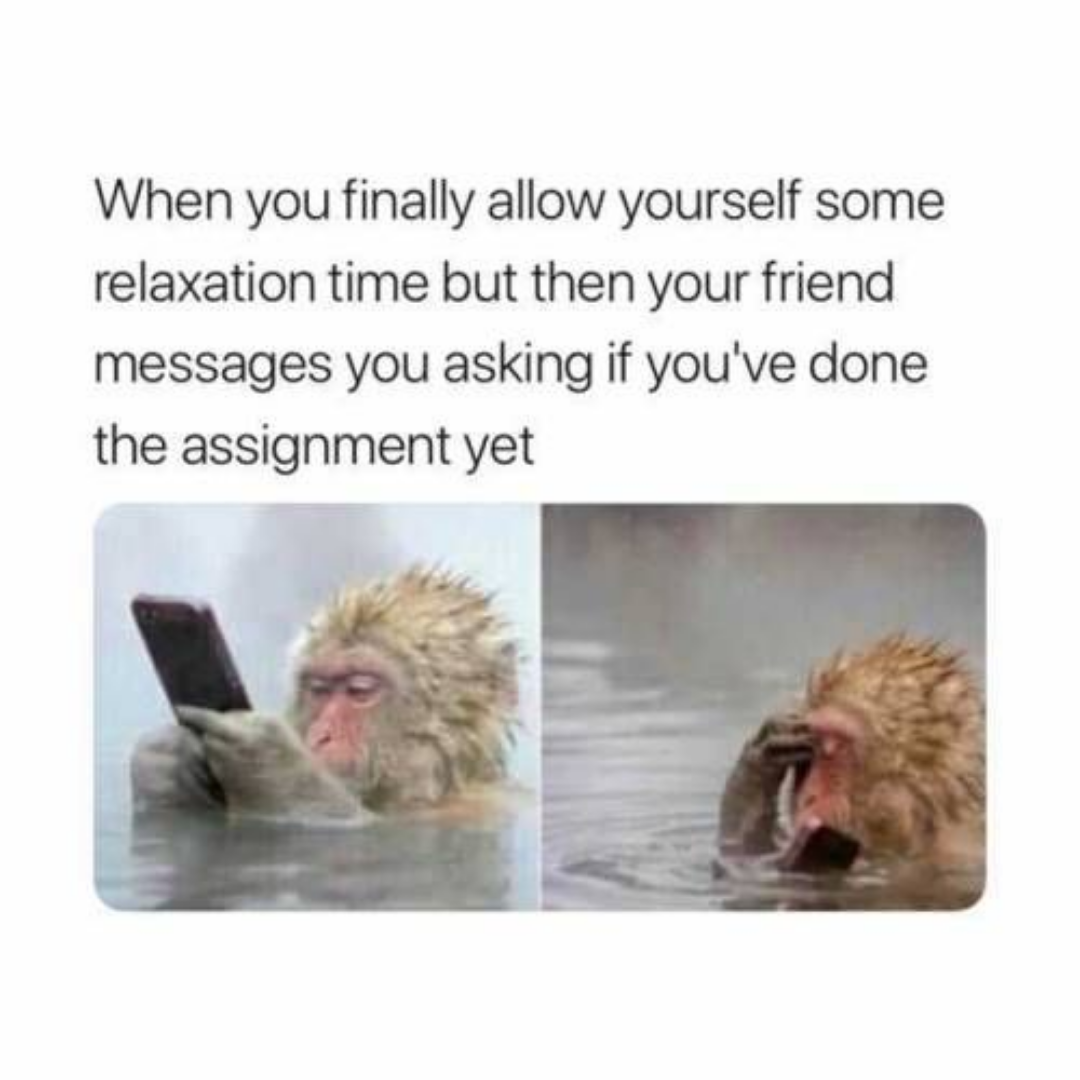 Assignment Meme Student Memes Funny School Memes College Memes
