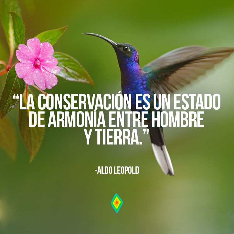 La Conservación Es Nuestro Esfuerzo Por Entender Y Preservar