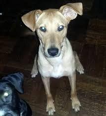 Image Result For Greyhound Mix Shar Pei Unique Dog Breeds Rare