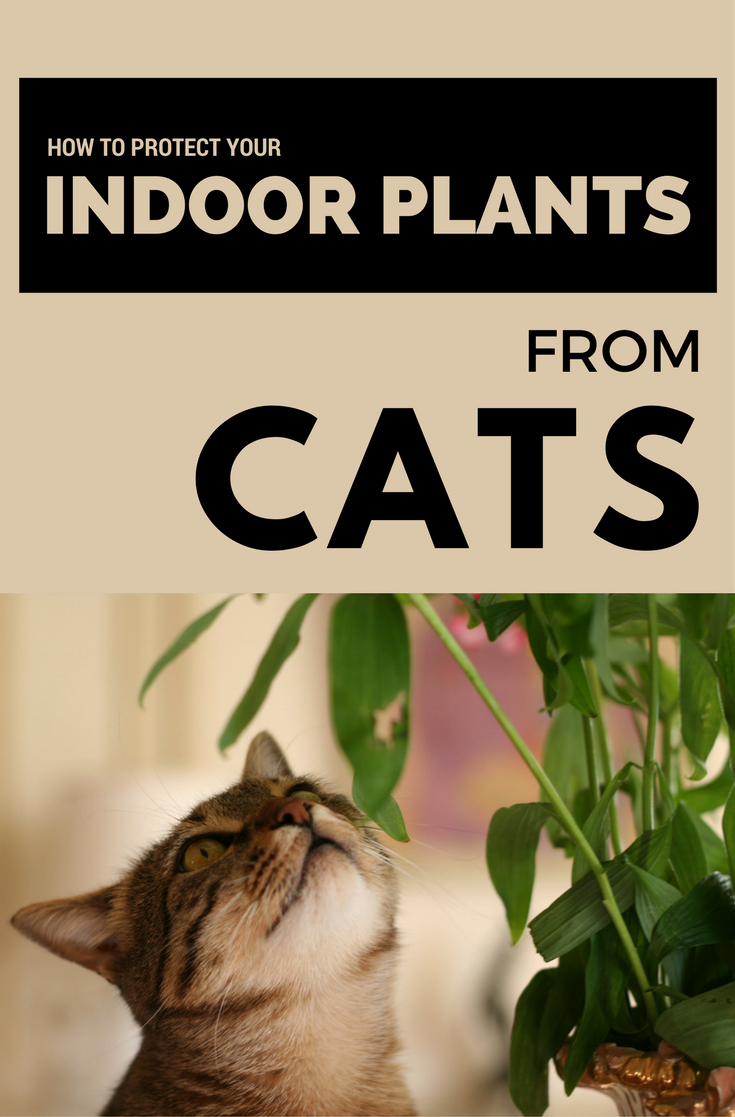 How To Protect Your Indoor Plants From Cats Cat Plants Indoor Plants Plants