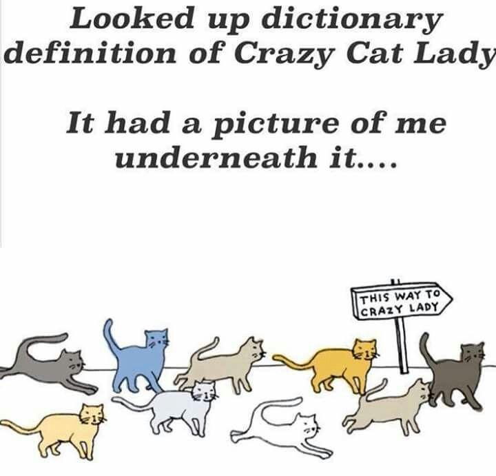 Definition of Crazy Cat Lady. Crazy cats, Crazy cat lady