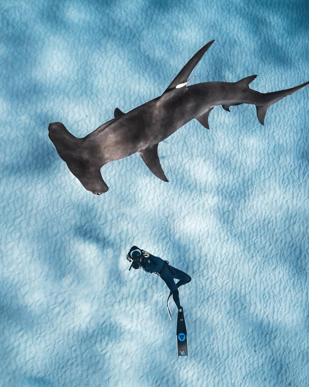 Astonishing Underwater Photography By Andre Musgrove Underwater Photography Underwater Ocean Photography