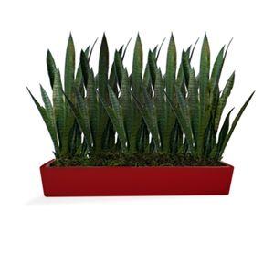 Tabletop Windowbox Planters Large Plantersrectangular