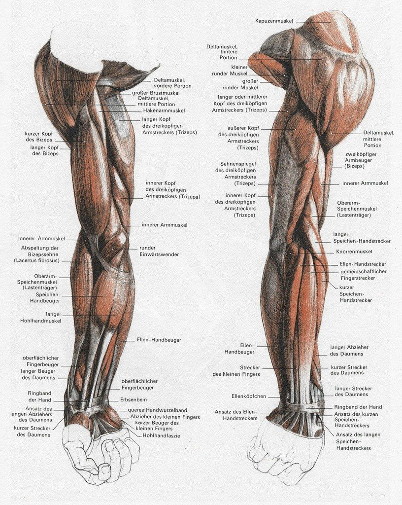 Arm And Hand Anatomy Anatomy Anatomy Anatomy Reference Anatomy