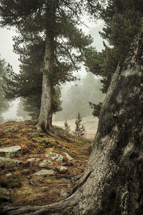 unwrittennature:   into the woods   Jean-Pierre Perren