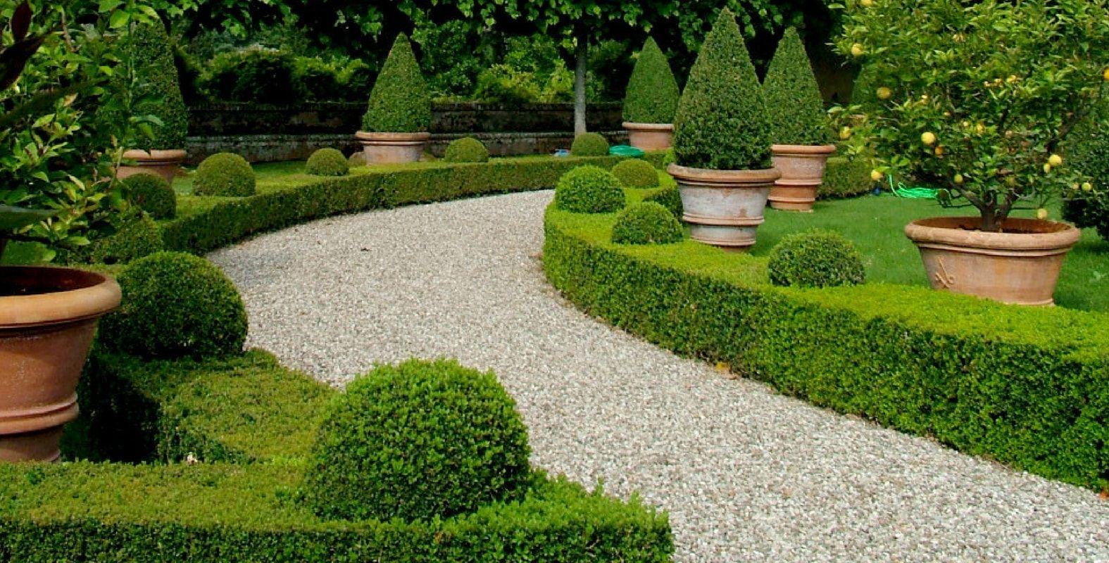 Planter Une Bordure De Buis planter une bordure de buis | jardins, bordure et buis
