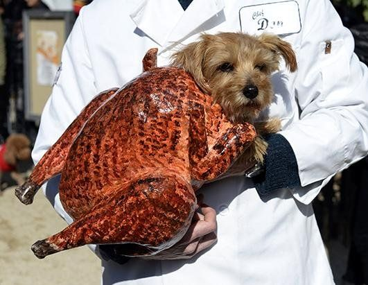 14 Fabulous Pets Dressed As Food Related Things For Halloween Dog Halloween Costumes Dog Parade Dog Halloween