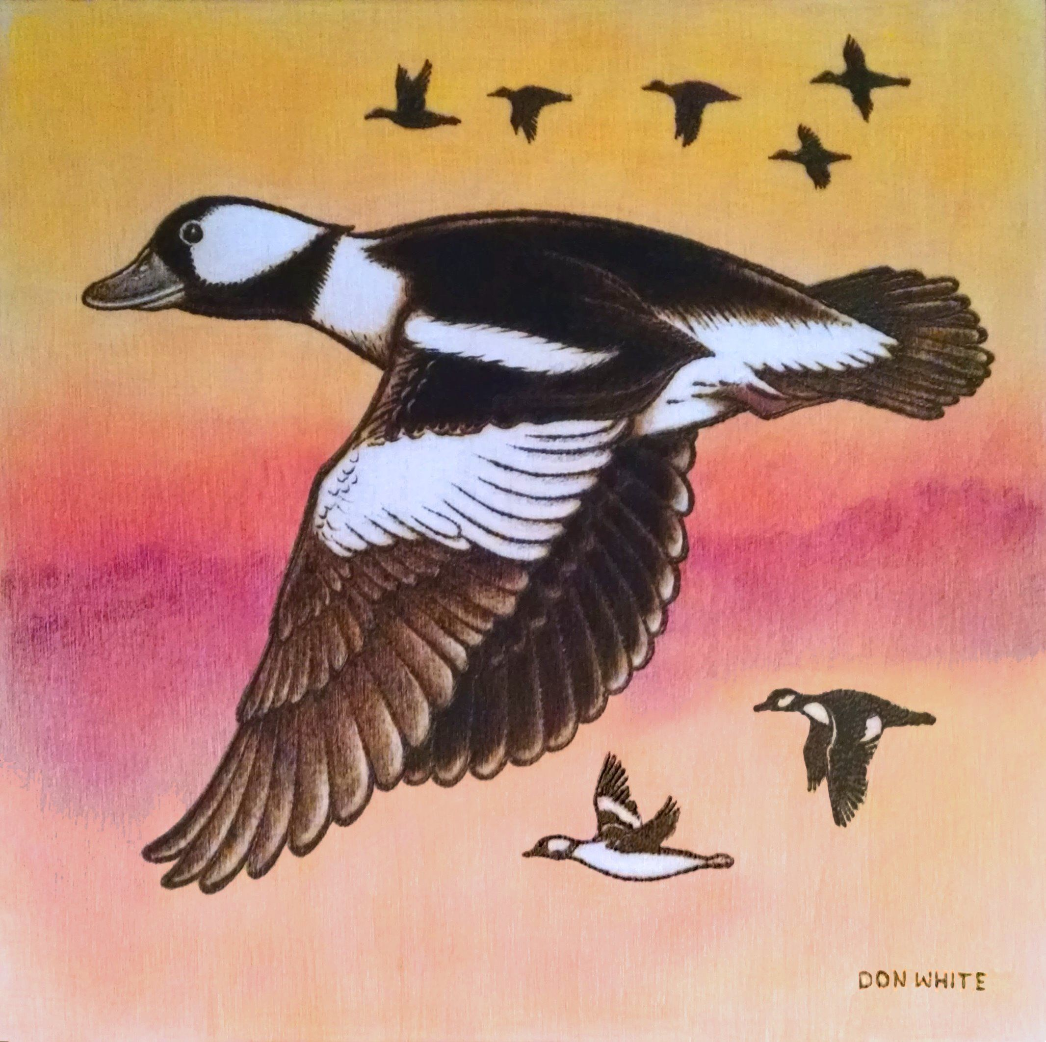 Bufflehead ducks - 10 x 10 inch plywood. (Colored with Prismacolor & oil pencils.) (sold)