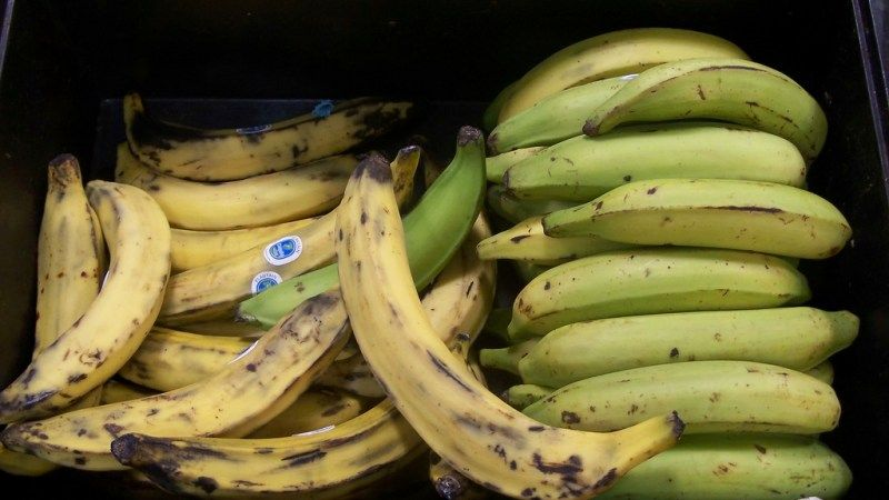 What S The Difference Between Bananas And Plantains Plantain Fritters Fritters Food