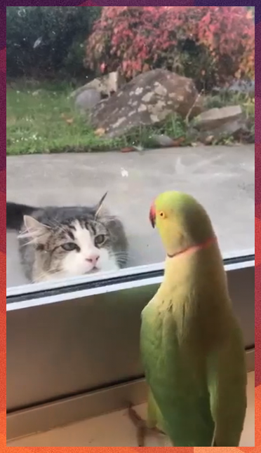 Naughty Parrot Playing With Cat in 2020 Cute animal