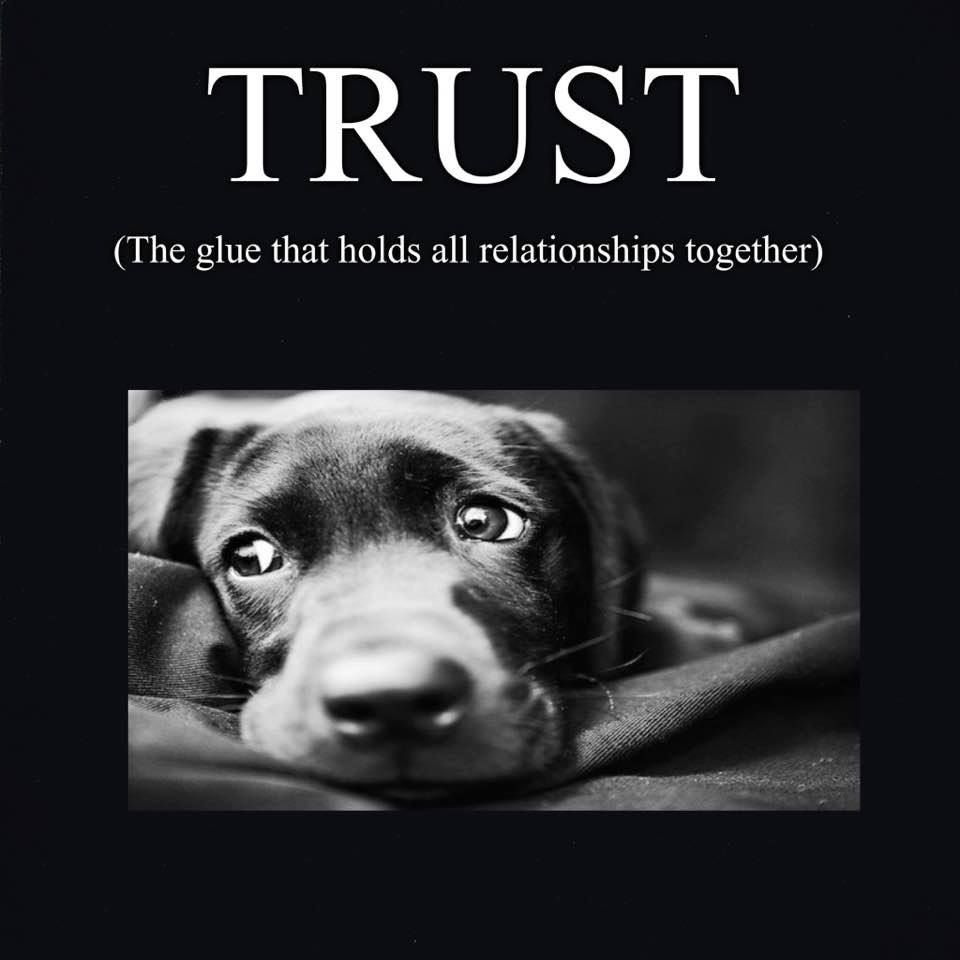 Quotes Dogs Trust Relationships Dogs Dogs And Puppies Puppies