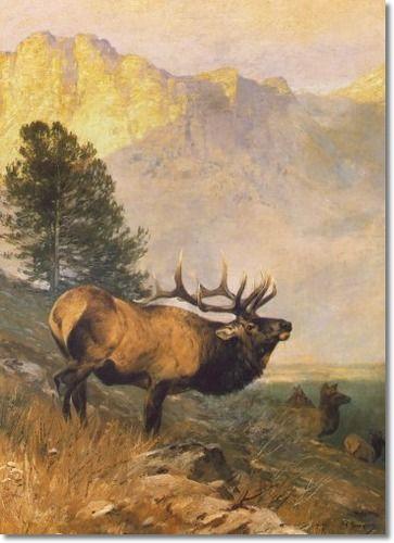 Carl Rungius - Bull Elk Painting