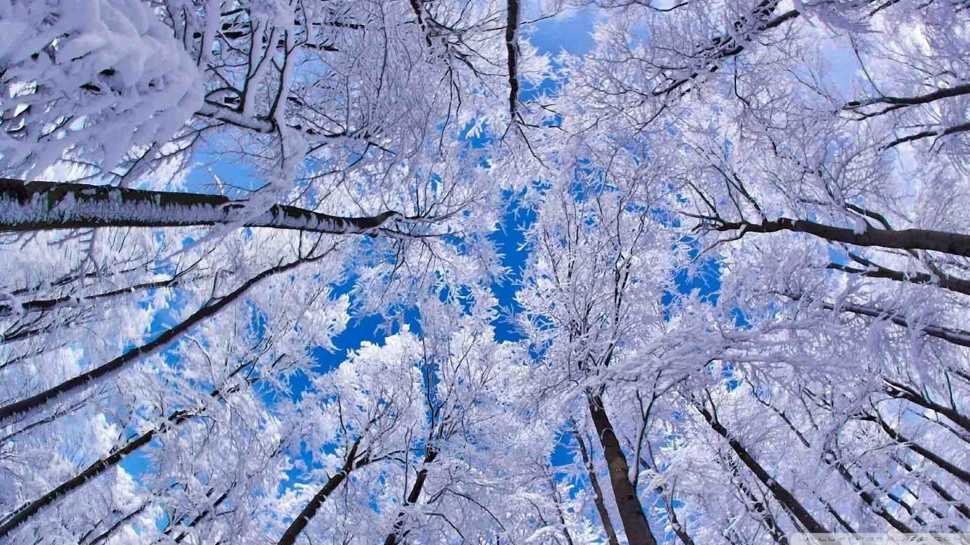 free desktop wallpapers winter scenes wallpaper winter backgrounds for desktop wallpapers
