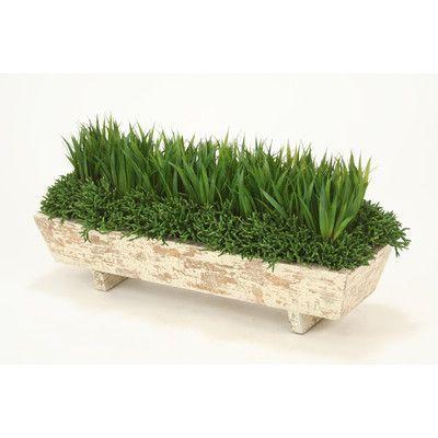 Distinctive Designs Grass and Succulents Desk Top Plant in Planter