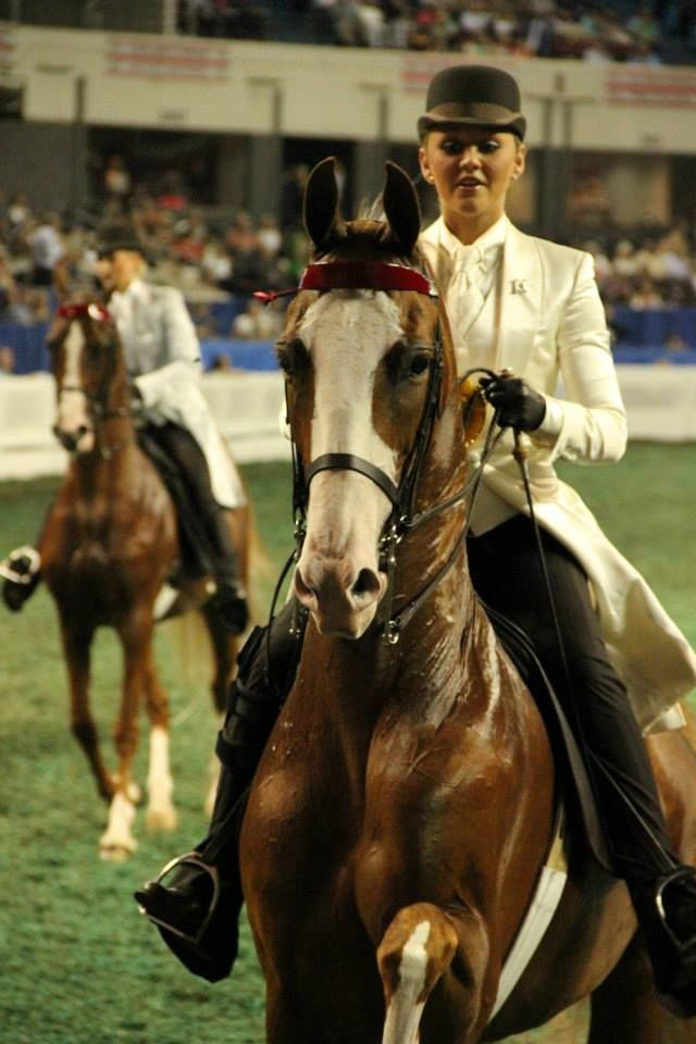 WC CH Platinum's New Look...American Saddlebred. Luv Hunter Chancellour!!(sry if I spelled that wrong)