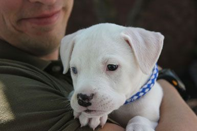 Puppy Socialization and the Sensitive Period: When is it, and is it important?