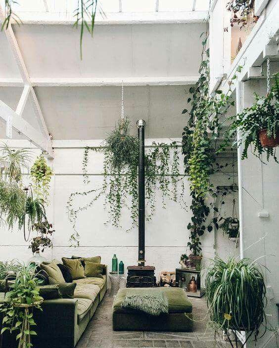 Wohnideen Privat zimmerpflanze grünleben wohnklima pflanzen zuhause