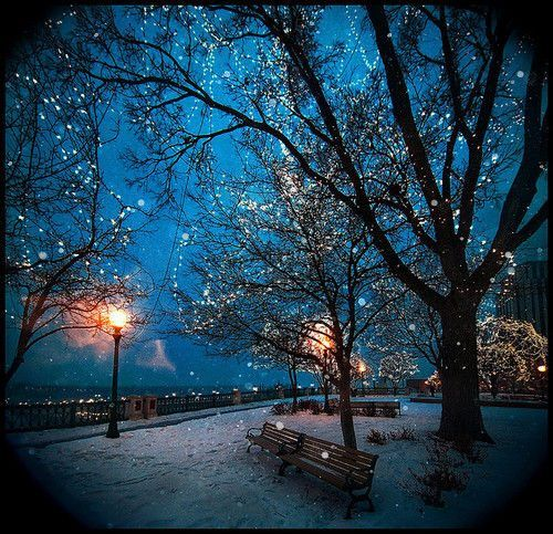 Trees Magic 4 Jpg Jpeg Image 500x483 Pixels Winter Scenes Beautiful Tree Winter Wonder