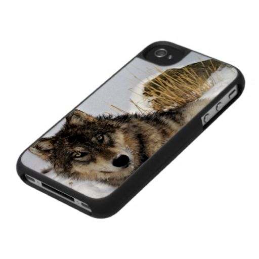 Gray Wolf or Timber Wolf Laying in the Snow Case For The iPhone 4
