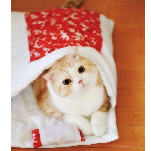 おやすみニャン かわいい寝姿を自慢できる 猫用和布団の会 フェリシモ 猫 子猫 かわいい