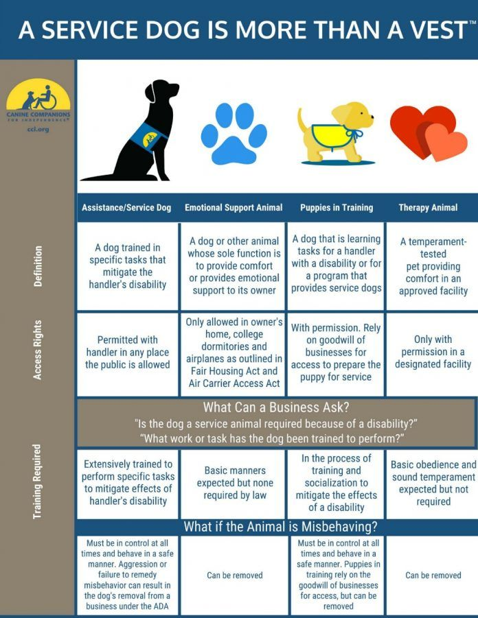 Service/Assistance, Emotional Support, and Therapy Dogs