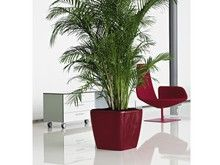 Health Benefits Of House Plants And Interior For The Home Office Specialist Uk Nursery Site With A Wide Range Houseplants