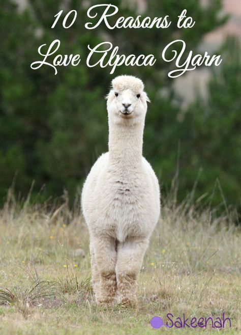 Discover Why Ozark S Julia Garner Needs To Be On Your Hair: 10 Reasons To Love Alpaca Yarn