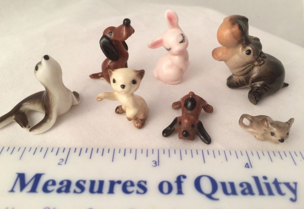 Mini Hippo Puppies For Sale Florida References