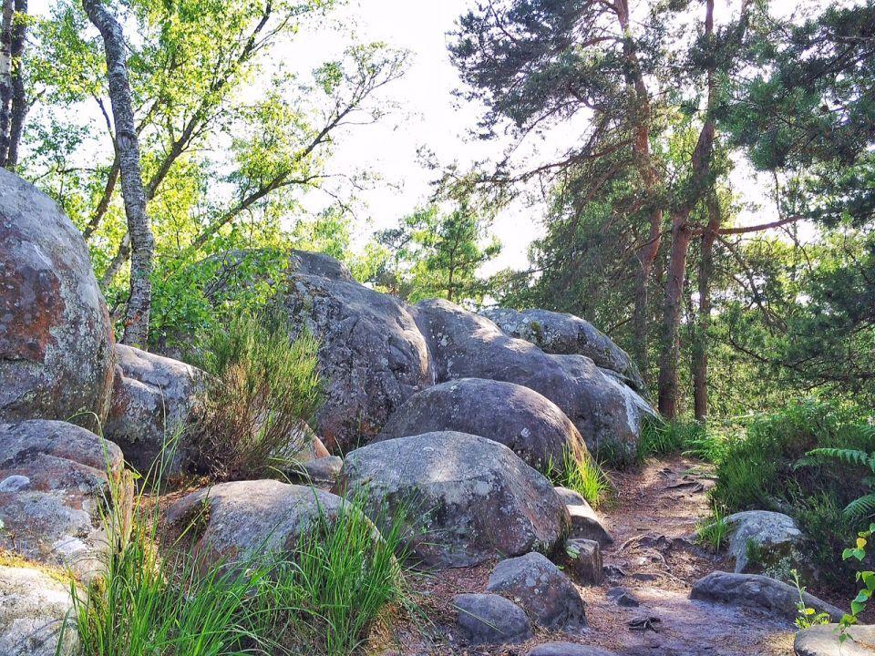Rocher Canon En Foret De Fontainebleau Carnets Nordiques Foret De Fontainebleau Paysage Foret Paysage