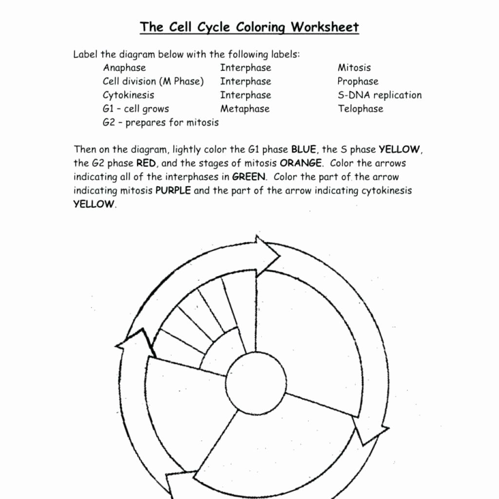 Coloring Transportation Worksheet Elegant Dna Replication