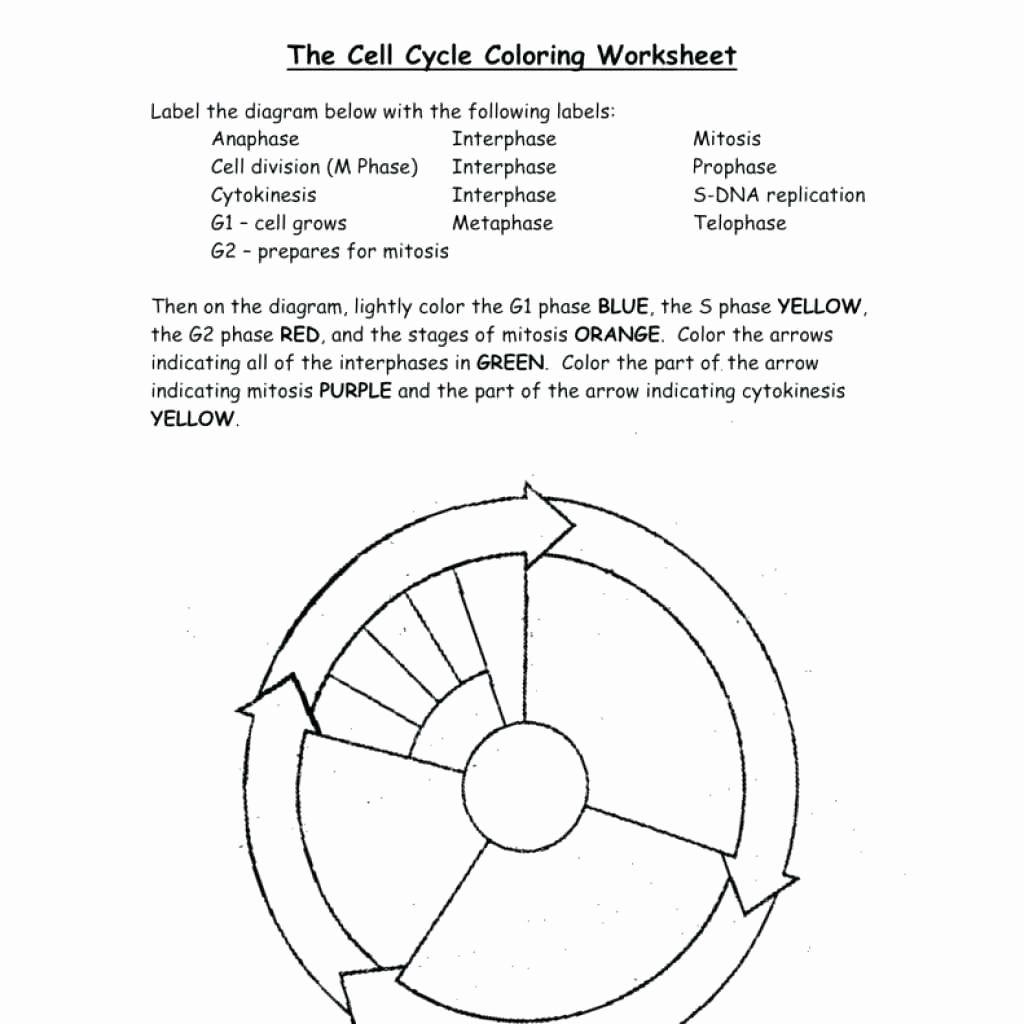 Coloring Transportation Worksheet Elegant Dna Replication