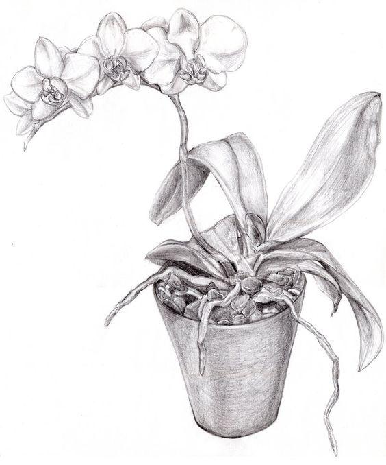 Resultado De Imagem Para Flower Pot Pencil Drawing Orchid