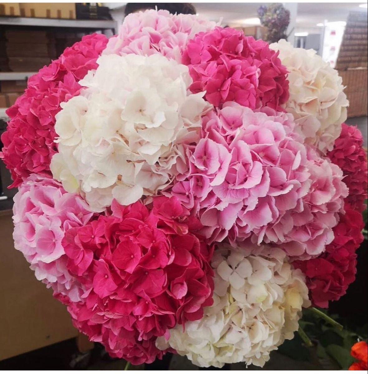 Pink Hydrangea In 2020 Pink Hydrangea Wholesale Flowers Pink Flowers