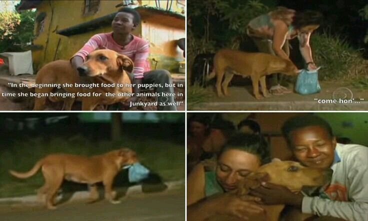 Dogs are the best junkyard dog dog travel street dogs