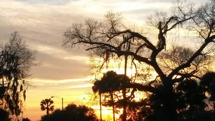 Trees in a sunset. KeNneth BACH Average Man face book