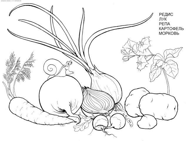 10 Gambar Mewarnai Sayuran Bonikids Warna Gambar Sketsa