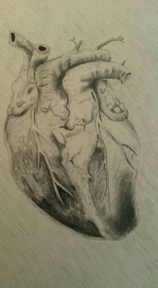 Anatomisches Herz Kohlezeichnung anatomical hart charcoal painting ...