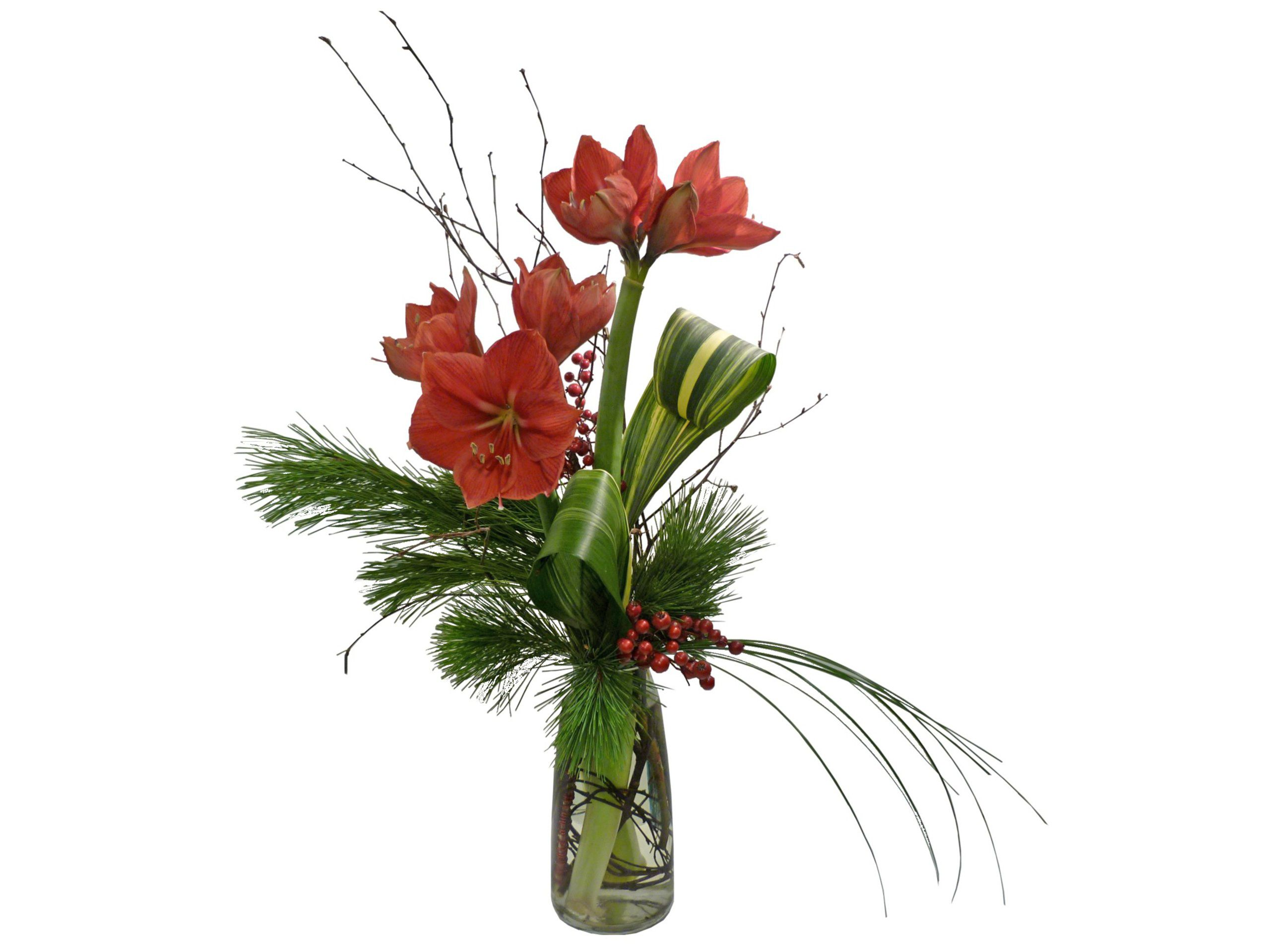 Amaryllis arrangement google search chistmas bouquet for Amaryllis christmas decoration