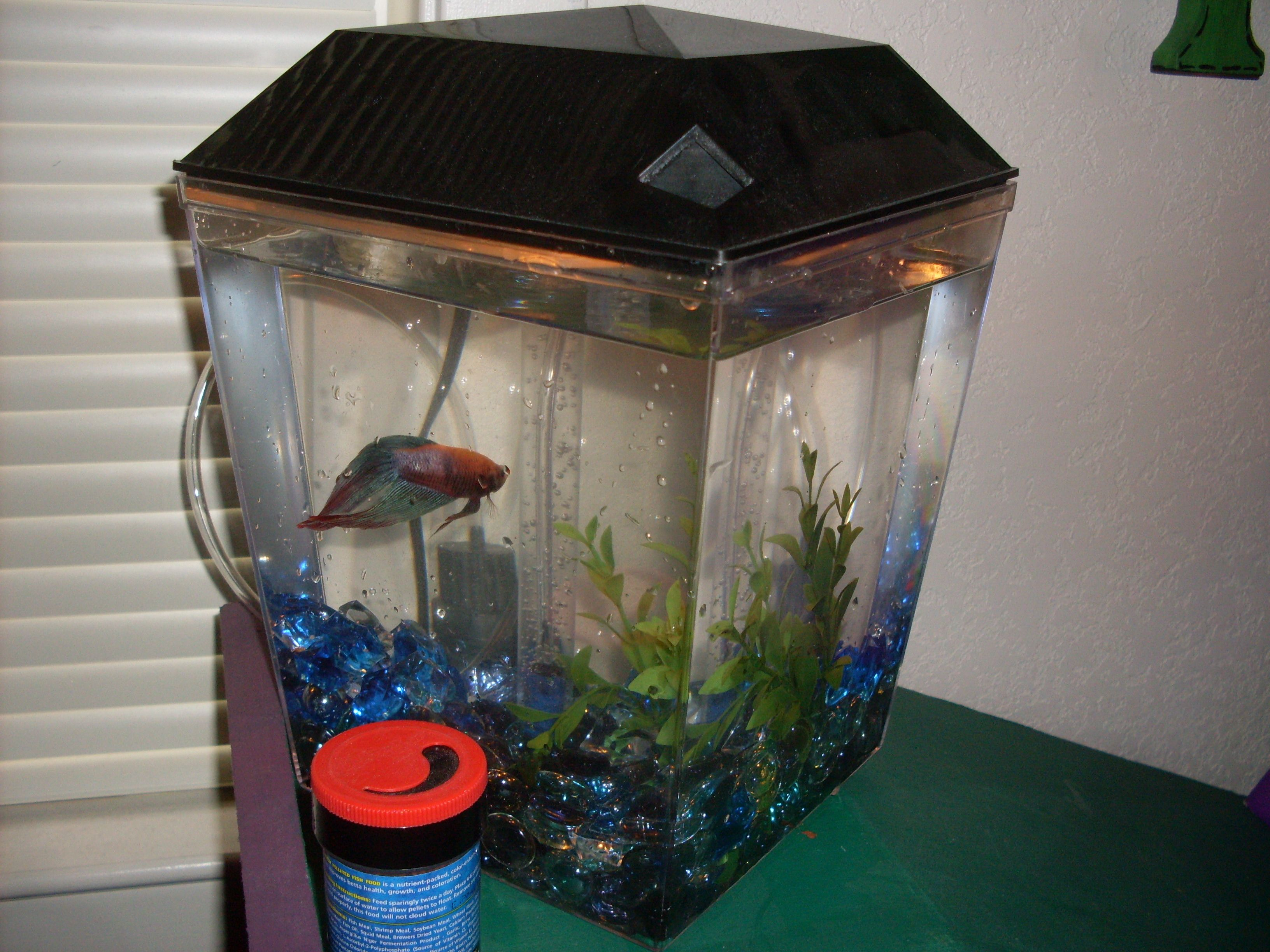 Change Your Betta Fish Water