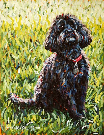 Molly. Pet portrait in acrylics on canvas board by Simon Birtall.