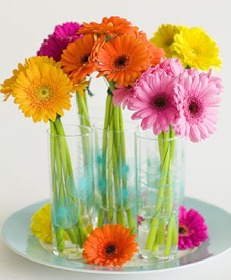 Gather the same colours of gerberas into tall glasses and set on a plate with some gerbera heads - makes a lovely centre piece on your table