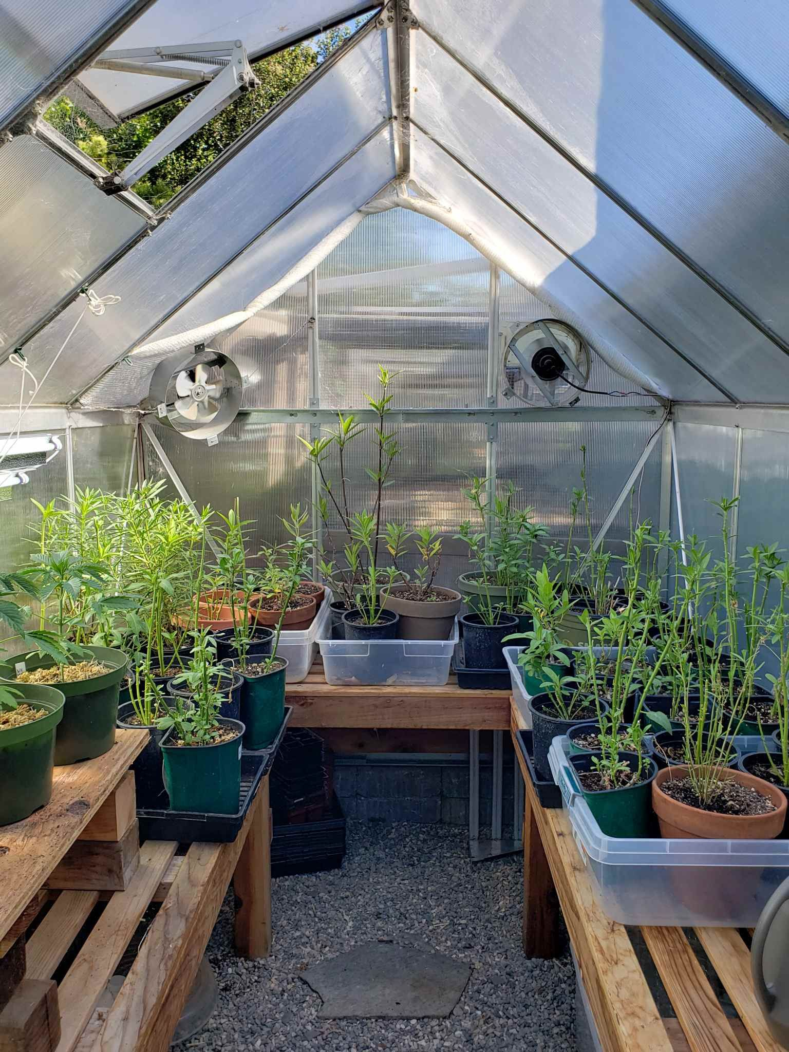 A Beginner S Guide To Using A Hobby Greenhouse Homestead And Chill Hobby Greenhouse Backyard Greenhouse Greenhouse Backyard greenhouse for beginners