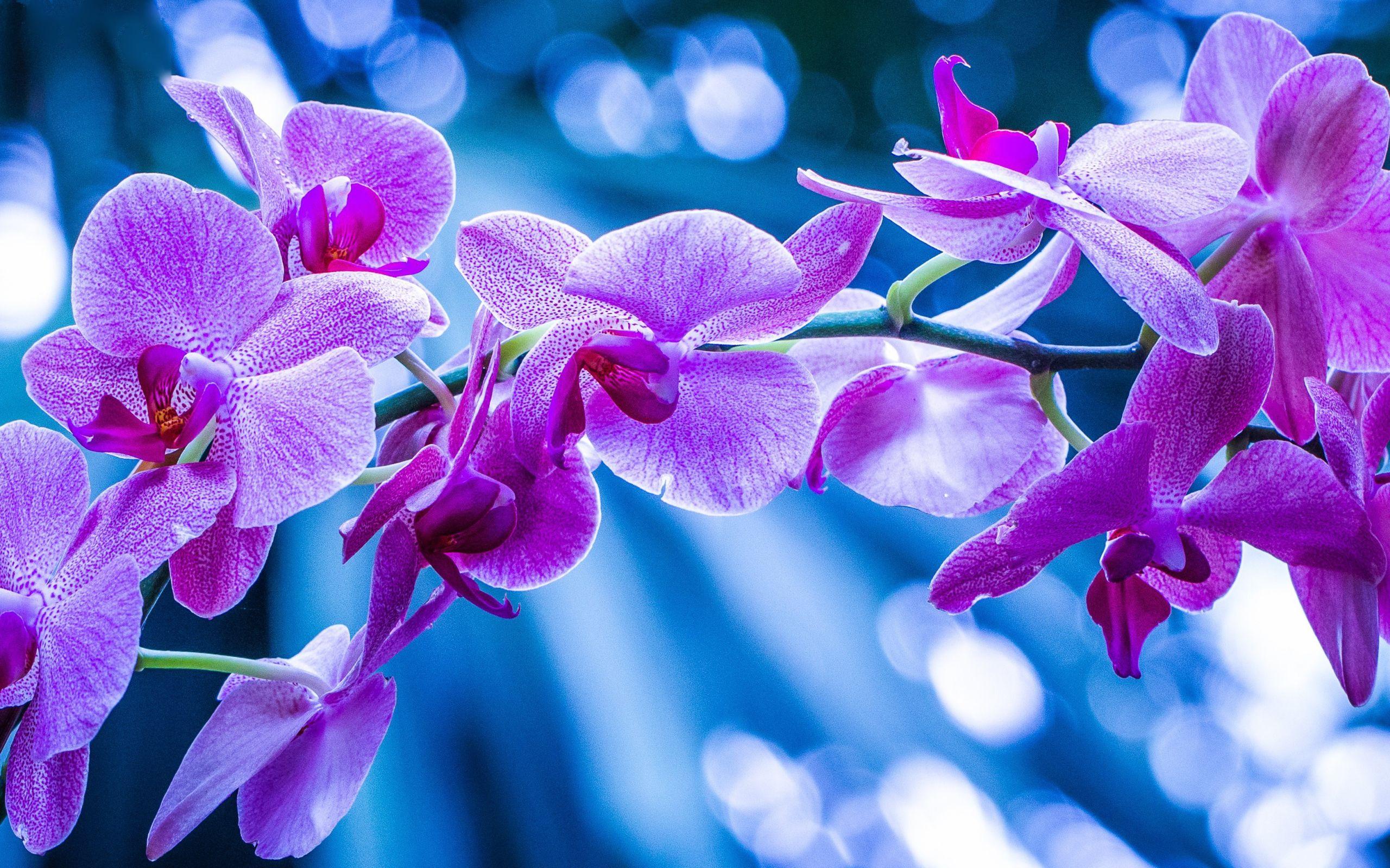 Resultado de imagen de orquideas violetas pinterest