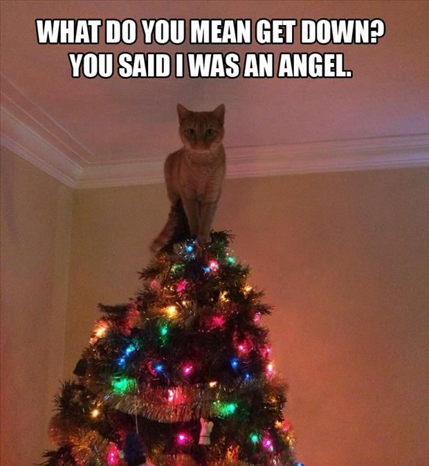 Image result for cats in christmas tree funny