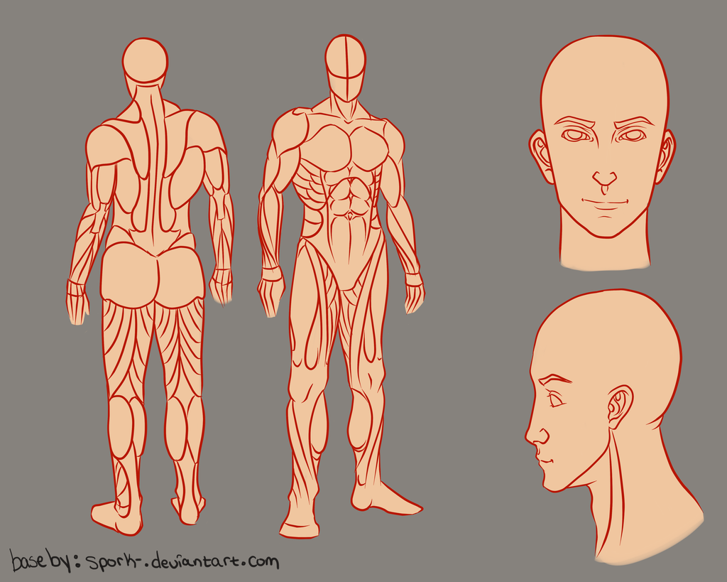 Pin By Nicolas Paradis On Anatomy Drawing Body Reference Art Reference Guy Drawing