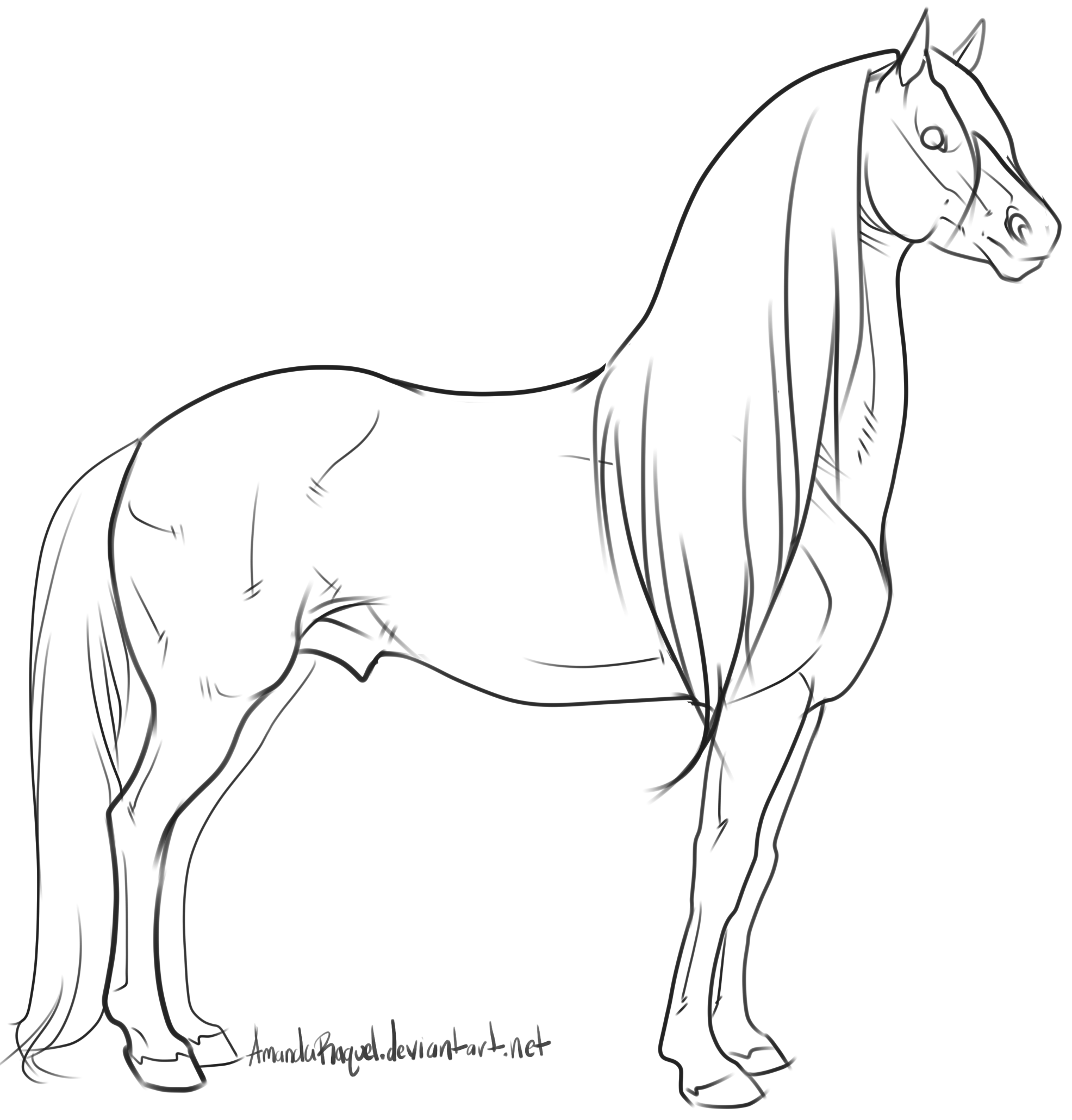 Warmblood stallion Lineart by AmandaRaquel With images