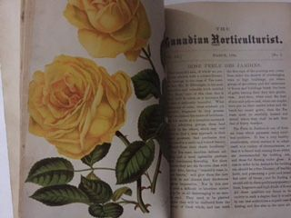 The Canadian Horticulturalist: This periodical was published in Toronto and Grimsby by the Fruit Growers Association of Ontario. Mr. D. W. Beadle of St. Catharines, Ontario edited many of the issues. You can find issues ranging from 1878 - 1914 in the Special Collections room at the library.