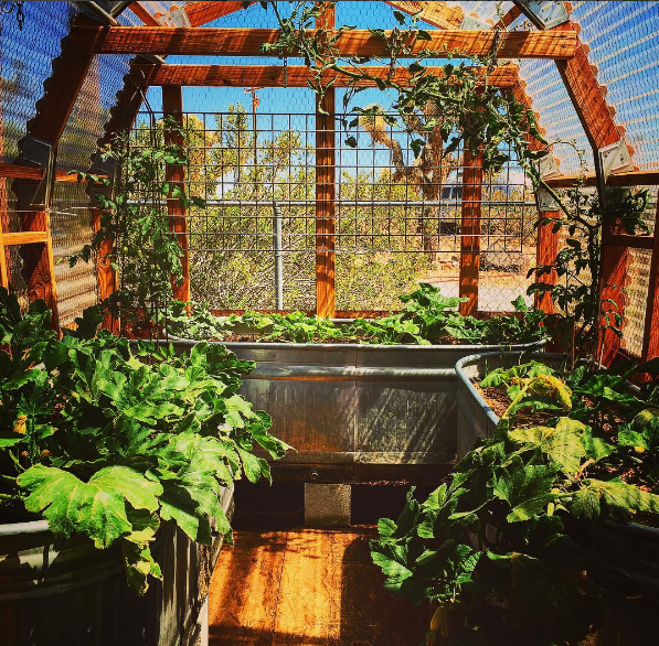 Awesome Desert Garden Structure She Used Tractor Supply Galvanized Stock Tanks As Raised Garden P Raised Garden Planters Garden Structures Beautiful Backyards